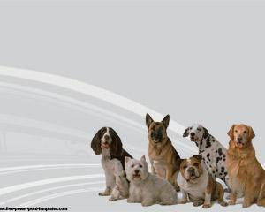 dog breeds powerpoint template